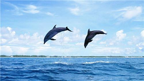 海豚动态壁纸官方下载