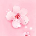 樱花直播app污在线观看